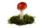 red mushroom