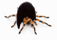 tarantula with unnatural wig of hair