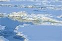 tundra ice